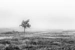 Het Nationale Park De Hoge Veluwe bij opkomende mist