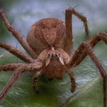 Macro van een spinnetje