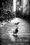 Duiven op straat