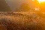 De Regte Heide ochtendgloren