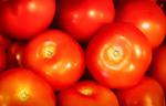 Zo rood als een tomaat
