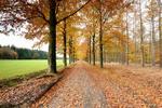 Kleurrijk herfsttafereel